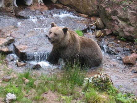 Fototage im Bärenpark